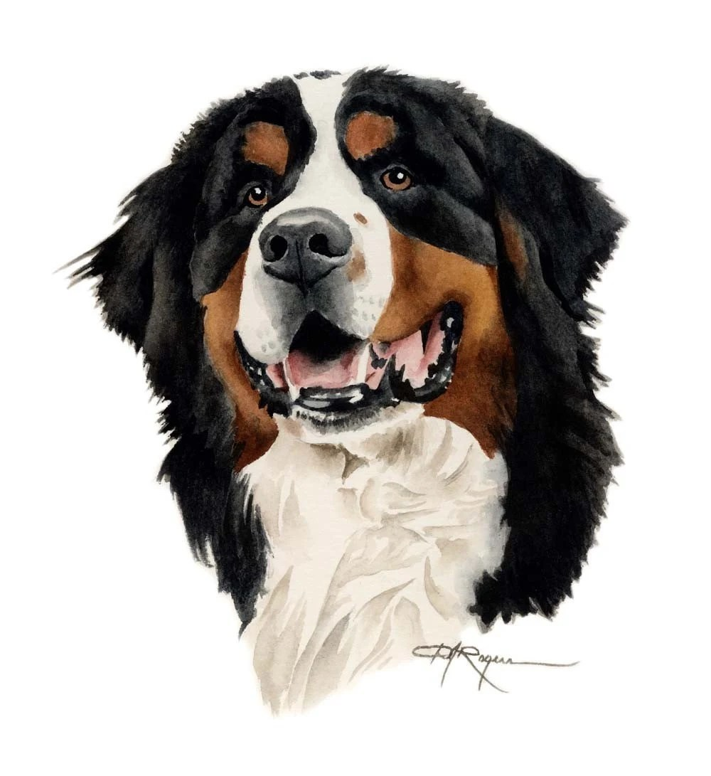 BERNESE MOUNTAIN DOG Art Print Signed By Artist D J Rogers