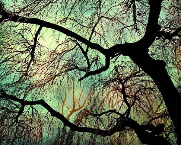Fine Art Photography Trees