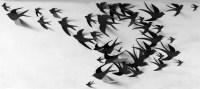 100 3D Bird Wall Art Circle Burst by LeeShay on Etsy