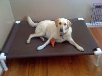 Large Dog Bed Raised Dog Bed Medium Bed Large Dog Bed Cot