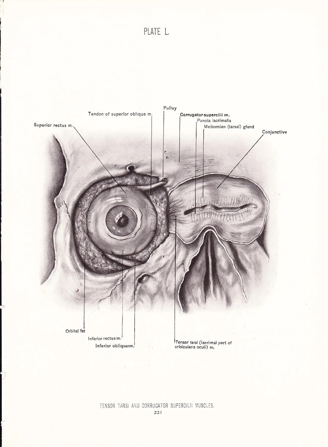 eye anatomy vintage diagram wiring diagrams for three way switches with multiple lights 1926 human print and face antique