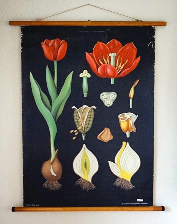 Vintage Botanical Wall Hanging Educational Poster