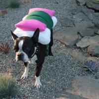 Sushi Dog Costume MD to XL custom sizing