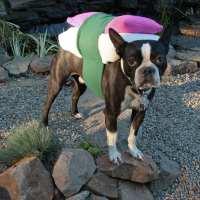 Sushi Dog Costume XS to MD custom sizing