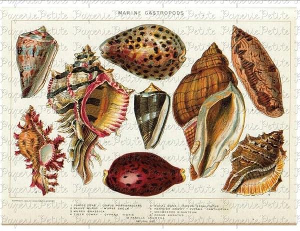Seashell Digital Collage Sheet