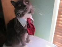 Fish Bones Business Cat Tie and Collar