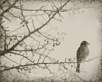 Winter Tree Branch 8 x 10 Art Print Spring Bird Vintage Style