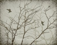 Nature Wall Art 8 x 10 Print Eerie Bare Tree Branches