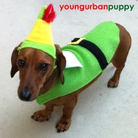 Buddy the ELF Costume for Dogs
