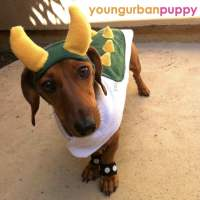 Four piece Bowser from Nintendo Dog Costume