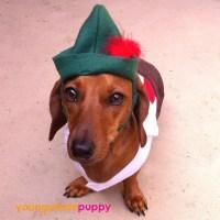 Hans Oktoberfest Lederhosen Dog Costume by YoungUrbanPuppy ...