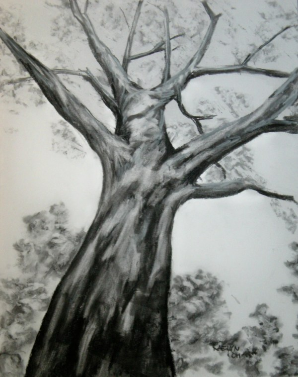 Sycamore Original Charcoal Drawing Free U. . Shipping