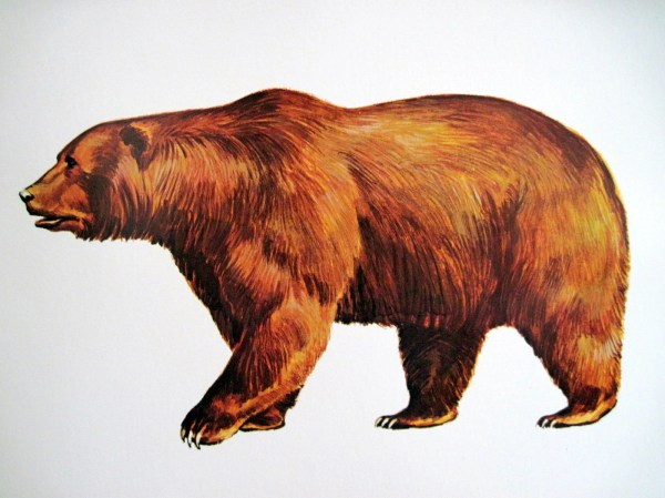 1960s Brown Kodak Bear Illustration Poster Vintage Extra
