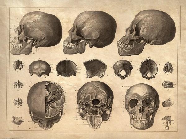 18x24 Vintage Anatomy. Human Skull Poster 081