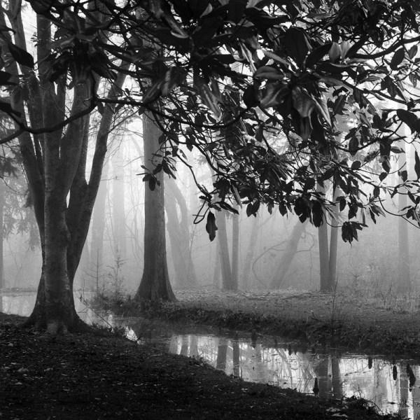 Black And White Tree Landscape