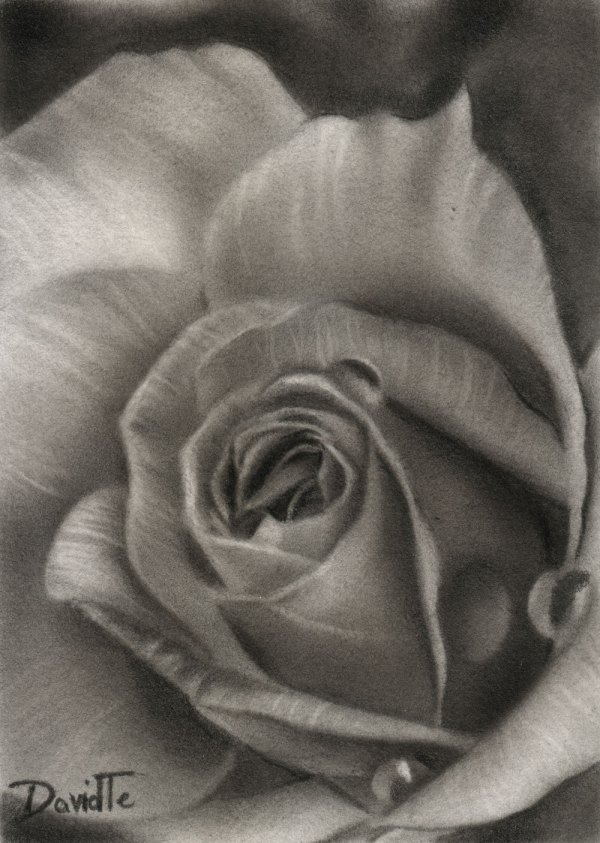 Aceo Flower . 18 Rose 13 Original Black And White