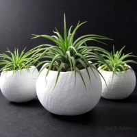 Mini Air Plant Container Pods Set of Three White Plant