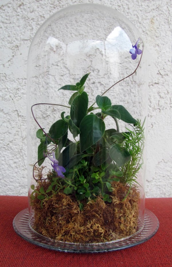Large Vintage Glass Dome Terrarium With Violets Bizzybetty