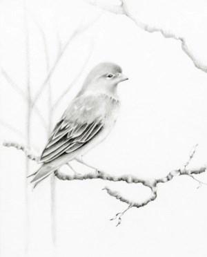 bird pencil drawing woodland drawings realistic vogel fine birds sketch giclee drawn bleistiftzeichnung gezeichnete sketches draw aves meiner zeichnung oiseaux