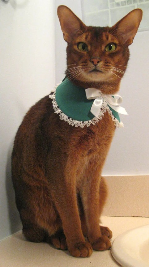 Lace edge Baby collar for cat, choose green&white, all white, or red and white