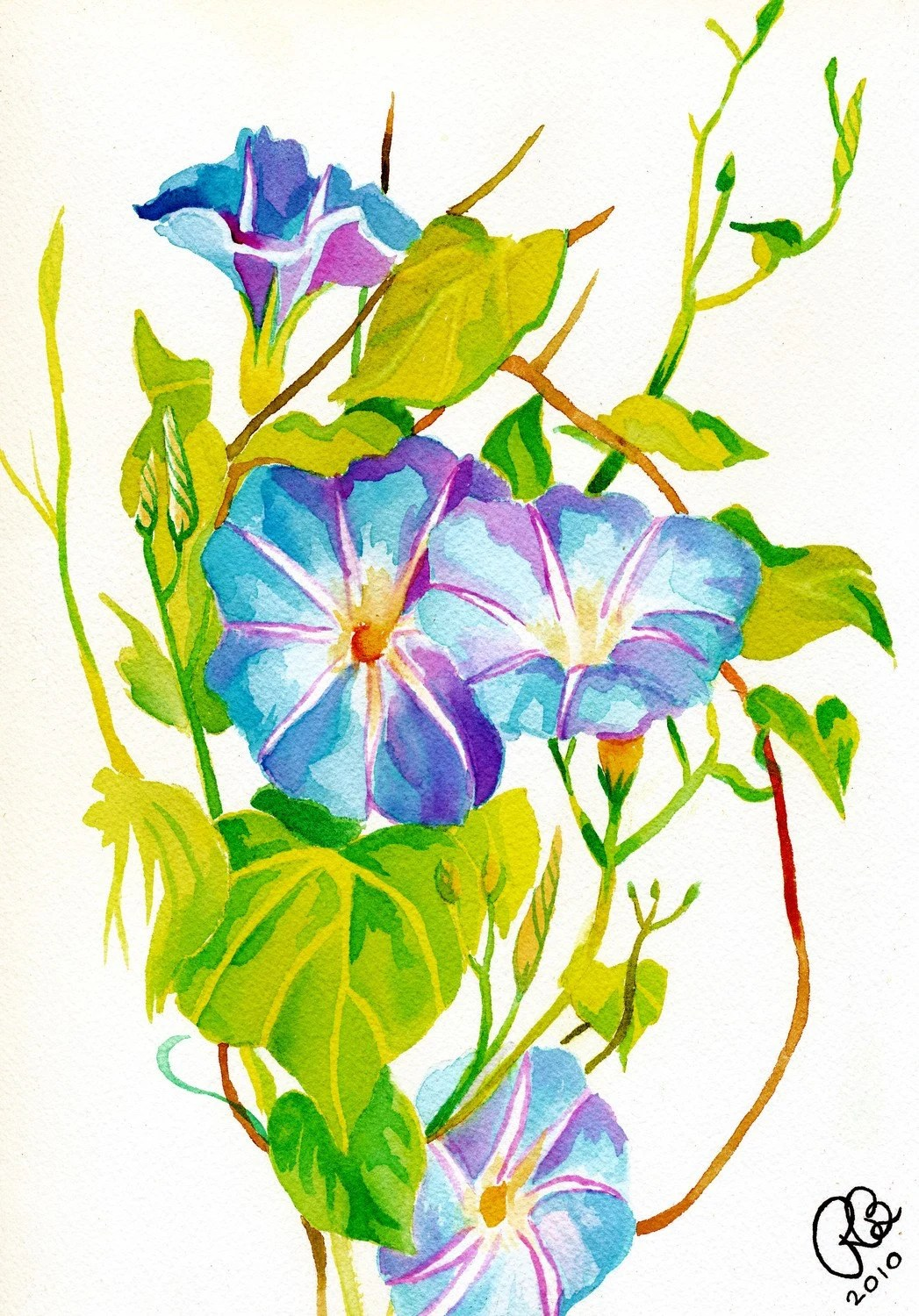 Morning Glories Print Colorful Flower Watercolor In