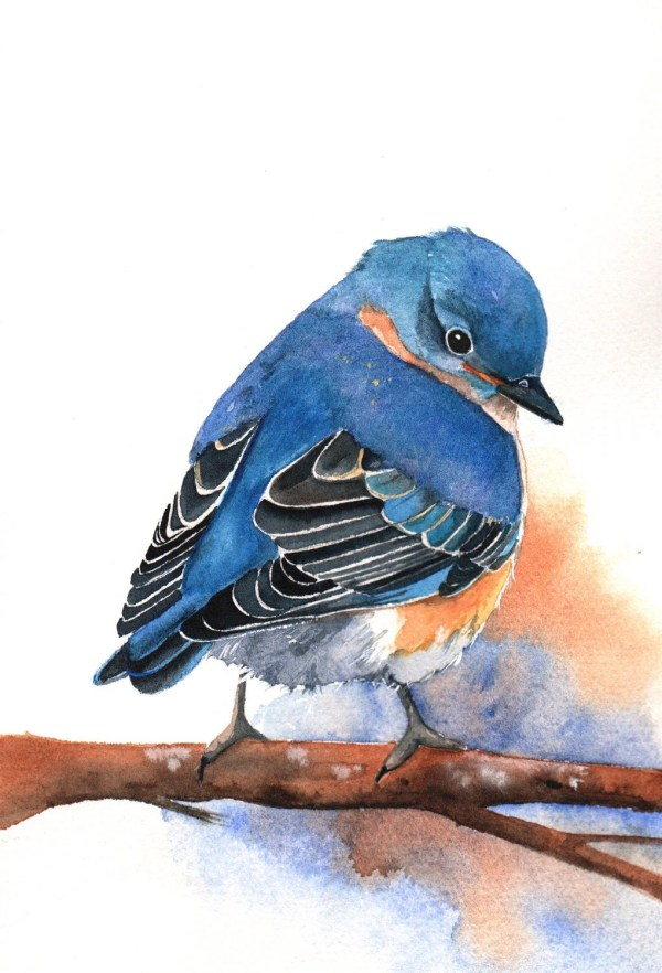 Items Similar Bluebird Painting -b029- Archival Print Of Bird Watercolor 5 7