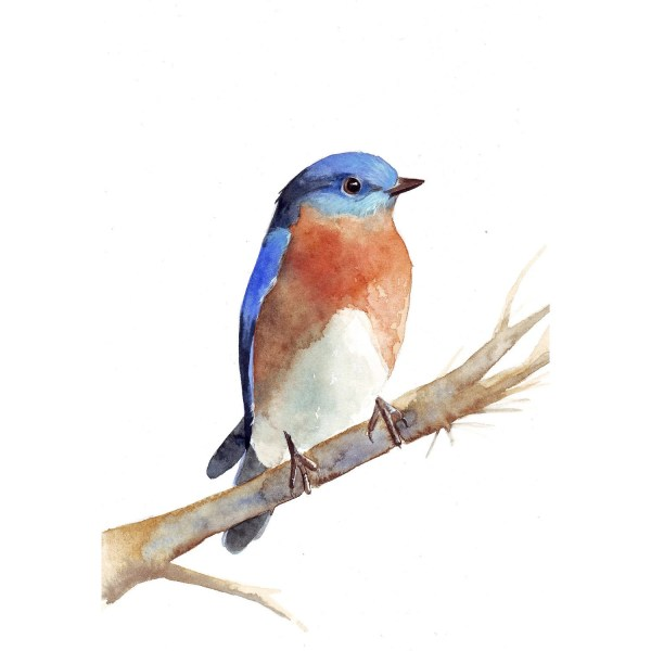 Items Similar Bluebird Painting - B034 Bird Print Of Watercolor 5 7