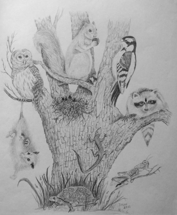 Nature Pencil Drawing Tree Of Life With Dixonartscrafts
