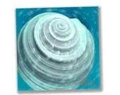 bathroom wall art, photos seashells, pastel home decor, 8x8 - artfulnotions