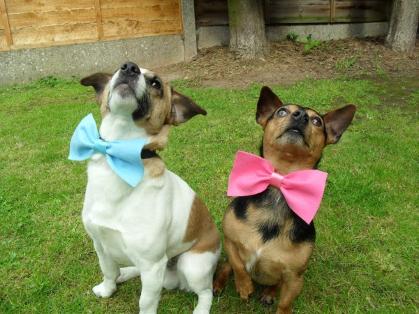 Rustic Wedding Dog Ring Bearer Dog Bow Tie Coloured by