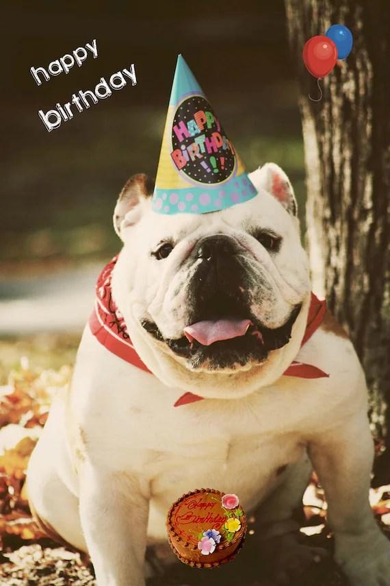 Carte De Joyeux Anniversaire Pour Le Bulldog Anglais 5 X 7