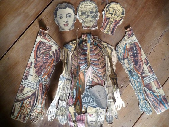 Vintage French Medical Anatomy Fold Out Doll Diagram Chart of
