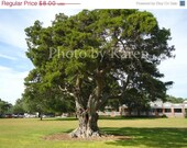 PRICE REDUCED CIJ Summer Tree 5 x 7  Original Photograph, other sizes available - ClicksByKaren
