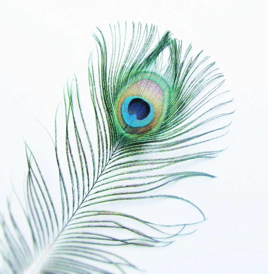Feather Wallpaper Home Decor
