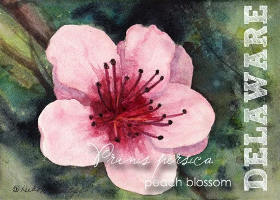 Delaware Watercolor ACEO State Flowers Prunus persica