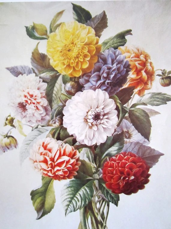 Items similar to Dahlia flower print vintage botanical