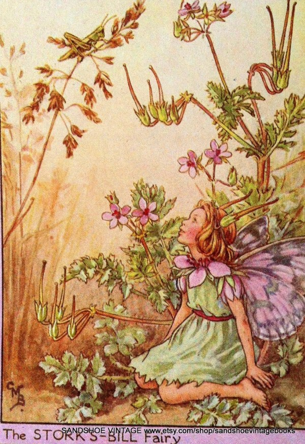 Hold 1930s Fairy Cicely Mary Barker Print Ideal Framing