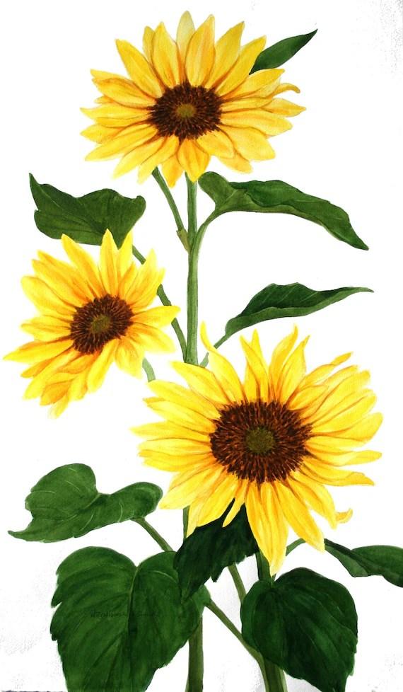 yellow sunflower group original