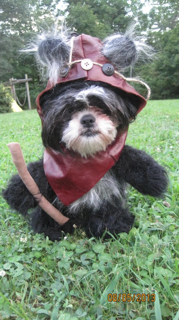 20 Ewok Dogs Pictures And Ideas On Meta Networks