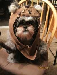 Ewok Hood/Fur Dog Halloween Costume Size Large