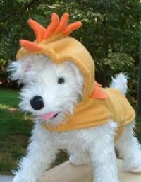 Items similar to Chicken Dog Costume - CUSTOM ORDER ...