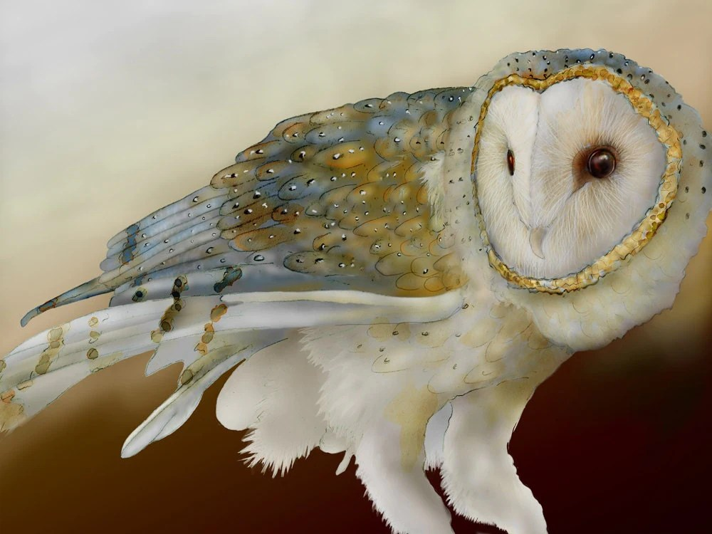 Barn Owl 12 By Wild Dreams / Jeannine Chappell