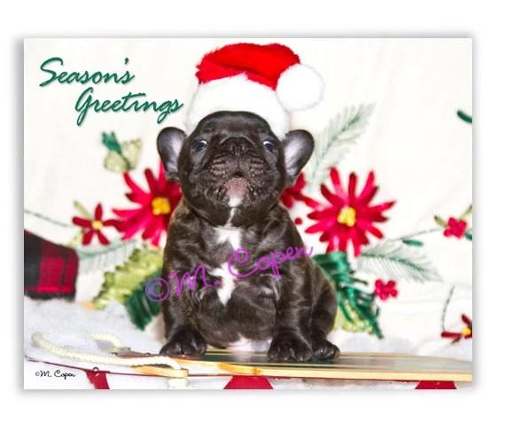 NEW Seasons Greetings Merry Christmas Happy Holidays