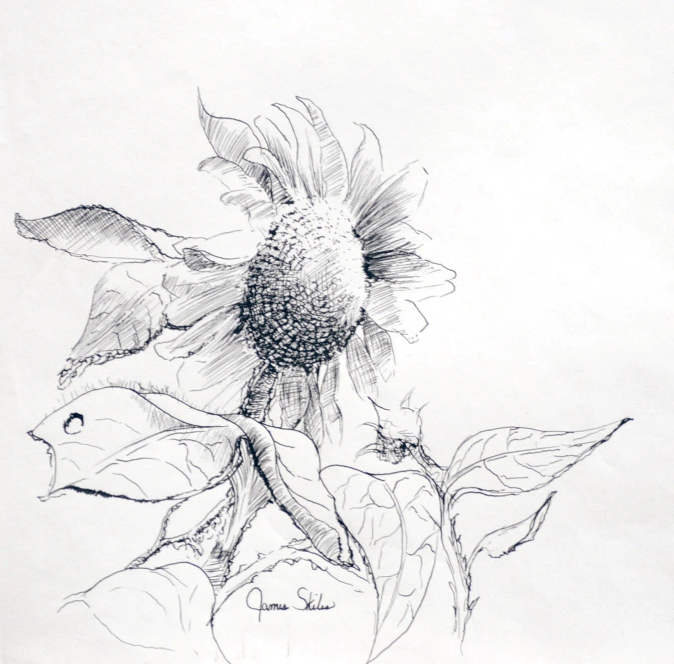Items similar to Whimsical Sunflower, Original Pen And Ink