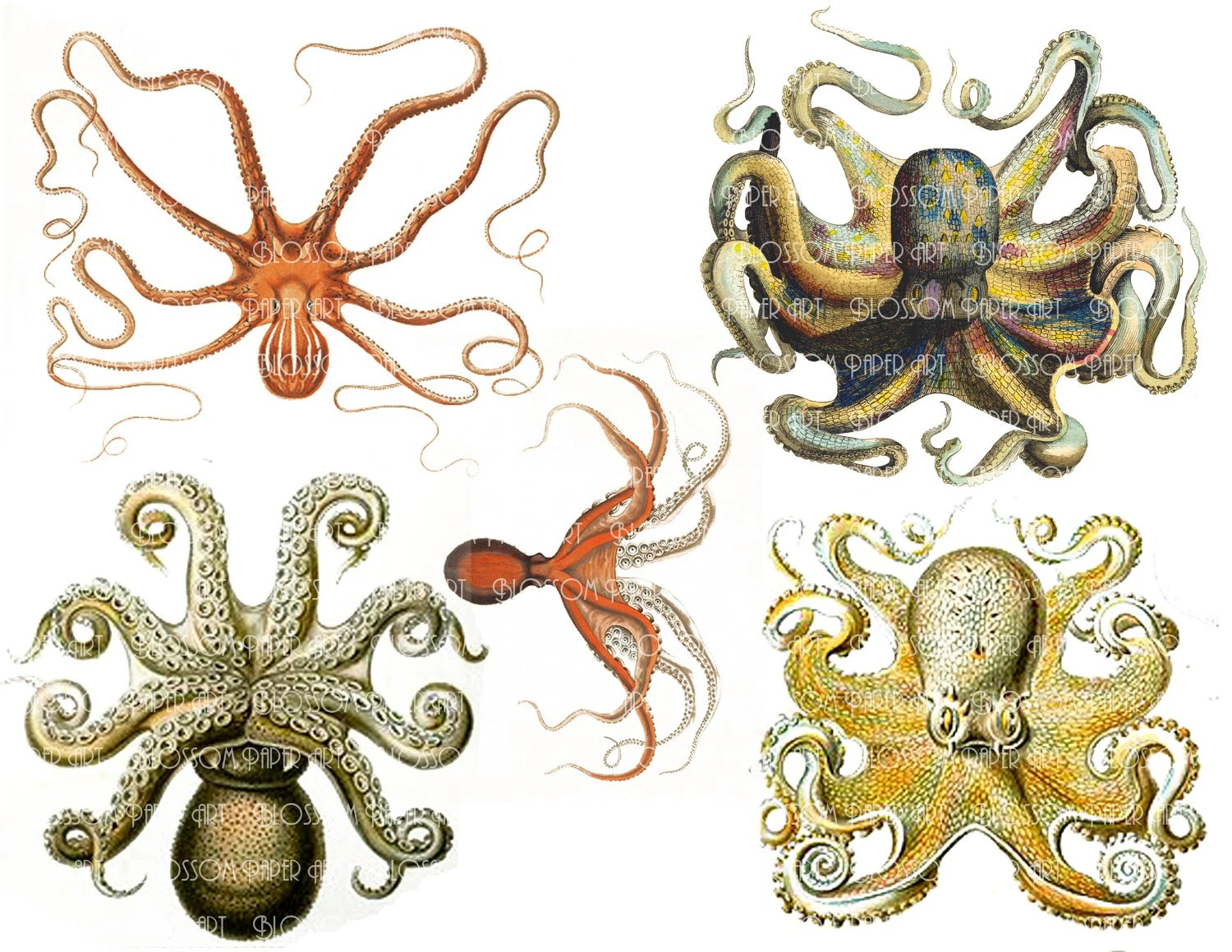 Octopus Collage Sheet Printables Digital Images