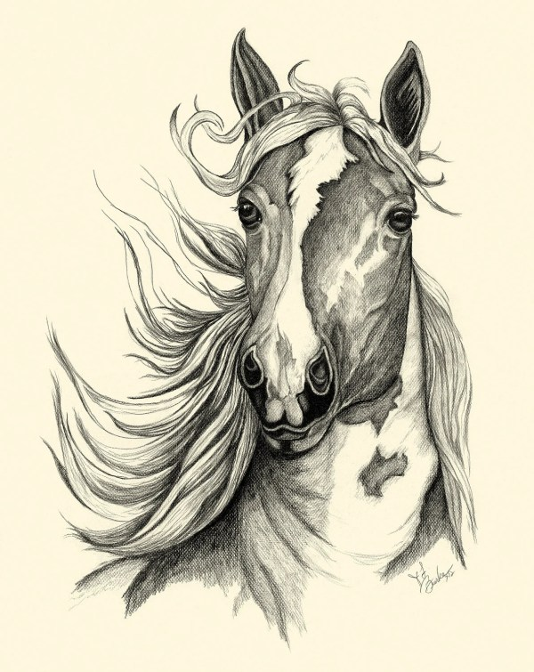 Textured Horse Sketch