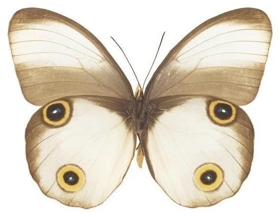White Moth Vinyl Decal 3 inch wide - WilsonGraphics