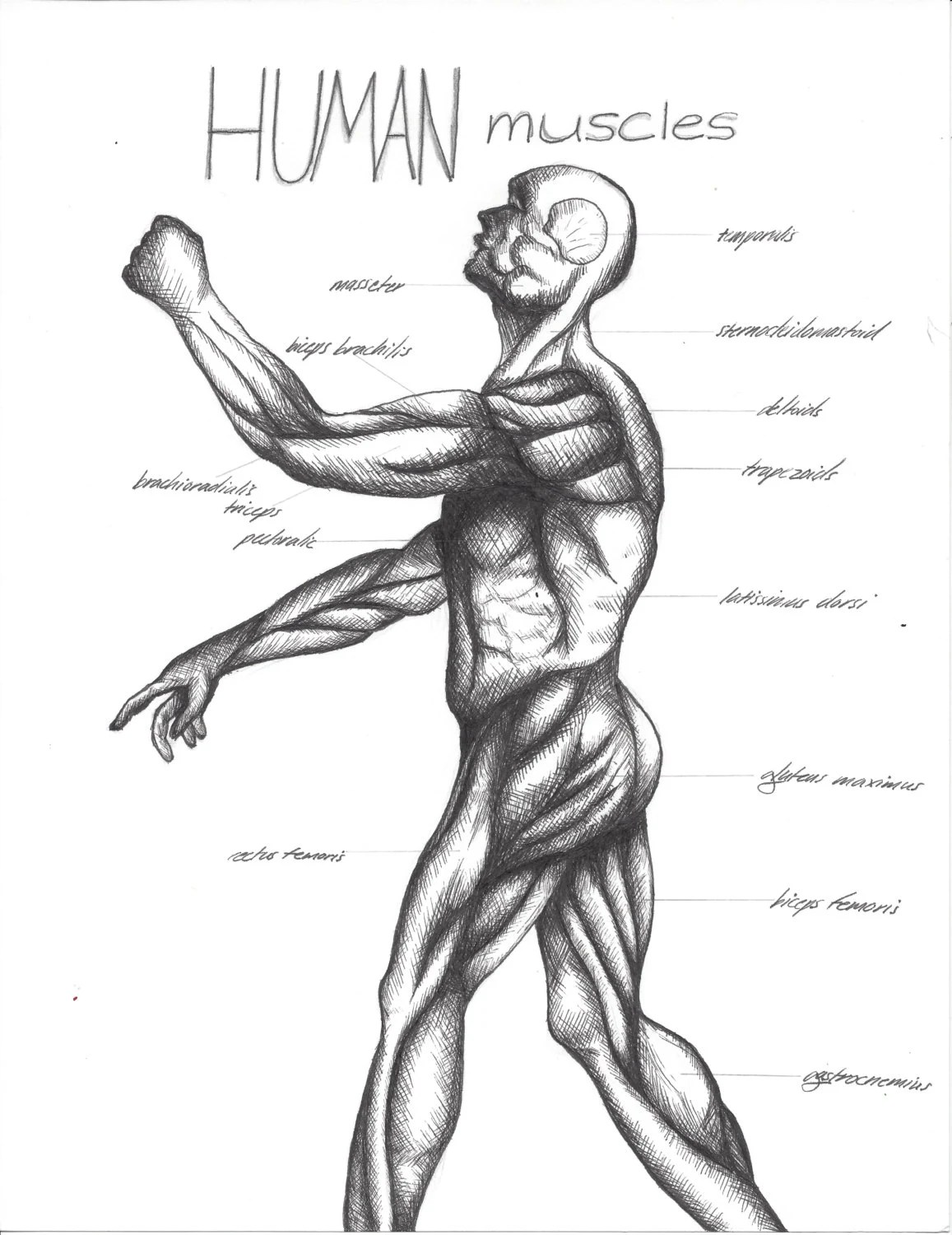Items similar to Cross-Hatching Art Drawing Anatomy Lesson