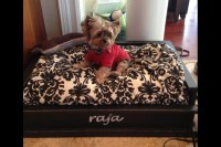 Dog bed handcrafted EX LARGE