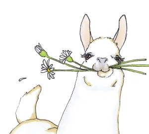 llama alpaca drawing quirky nursery face wall drawings draw llamas ilustration kawaii doodles alpacas arts prints sketch items similar printable